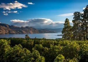 Valley view of Okanagan Lake surrounded by vineyards, forests, and mountains on a sunny day